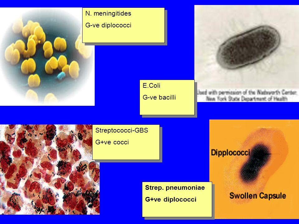 N. meningitides G-ve diplococci N. meningitides G-ve diplococci Streptococci-GBS G+ve cocci Streptococci-GBS G+ve cocci Strep. pneumoniae G+ve diploco