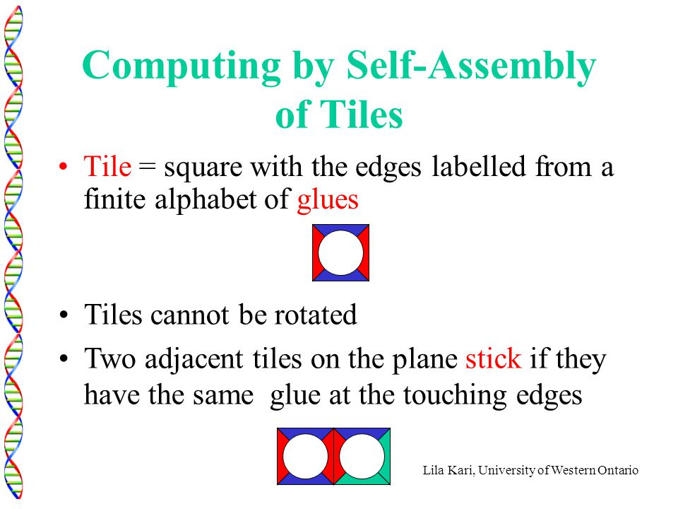 Lila Kari, University of Western Ontario Computing by Self-Assembly of Tiles Tile = square with the edges labelled from a finite alphabet of glues Til