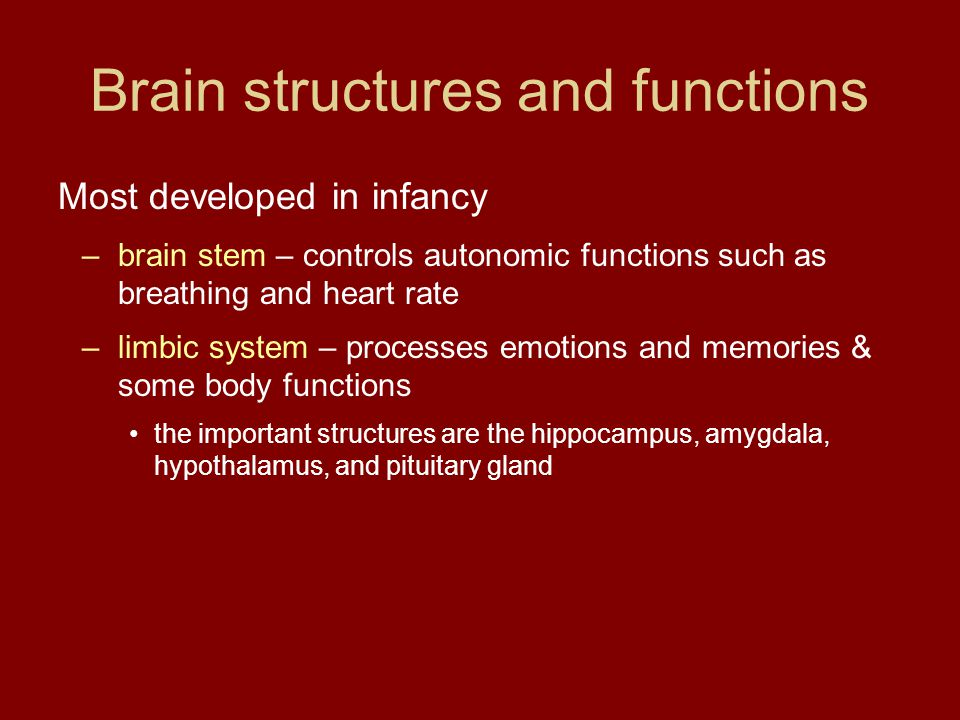 Brain structures and functions Most developed in infancy –brain stem – controls autonomic functions such as breathing and heart rate –limbic system –