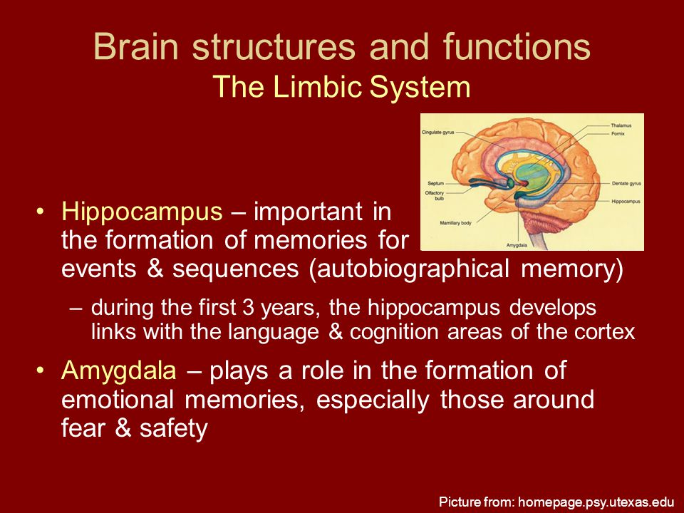 Brain structures and functions The Limbic System Hippocampus – important in the formation of memories for events & sequences (autobiographical memory)