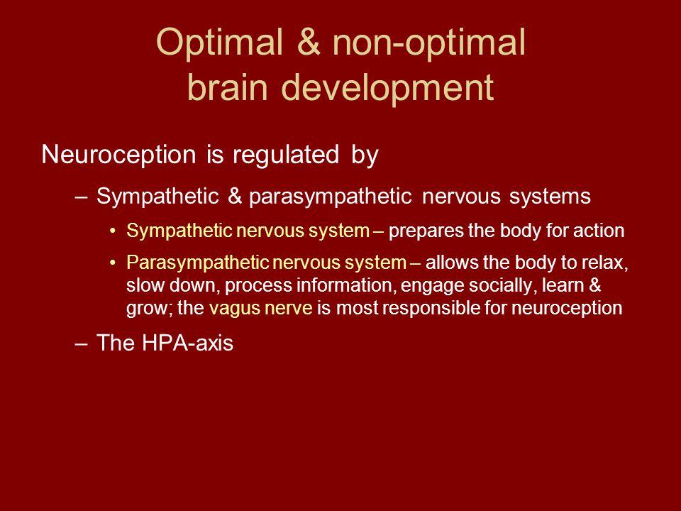 Optimal & non-optimal brain development Neuroception is regulated by –Sympathetic & parasympathetic nervous systems Sympathetic nervous system – prepa