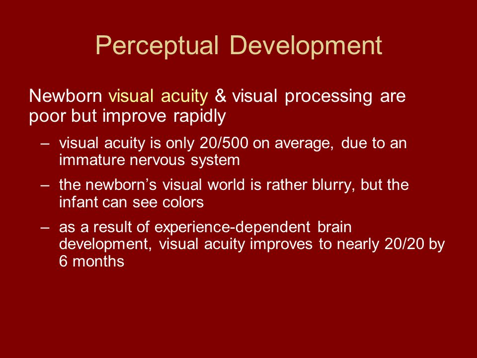 Perceptual Development Newborn visual acuity & visual processing are poor but improve rapidly –visual acuity is only 20/500 on average, due to an imma