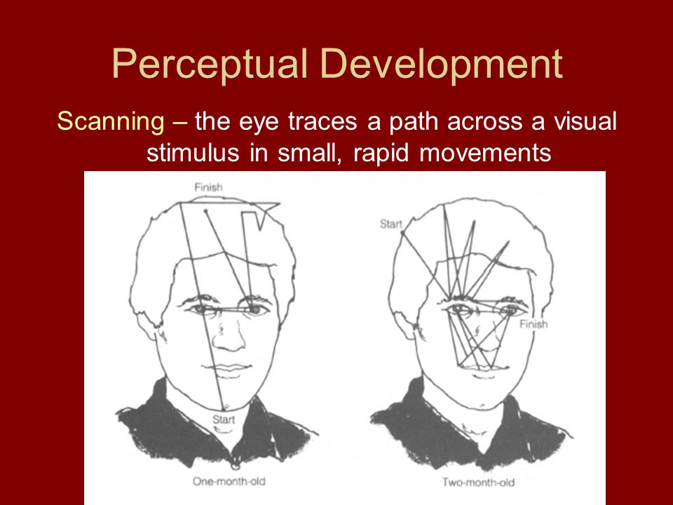 Perceptual Development Scanning – the eye traces a path across a visual stimulus in small, rapid movements