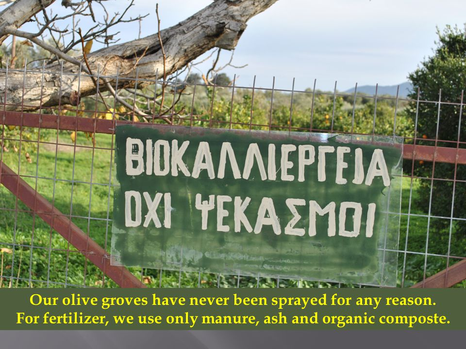Our olive groves have never been sprayed for any reason.