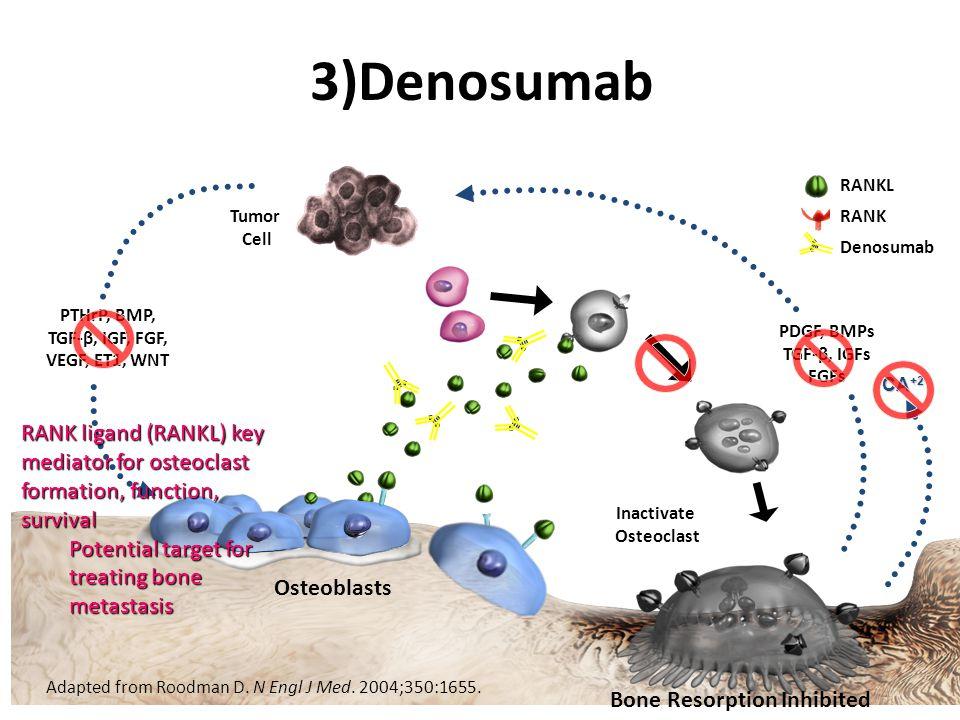 3)Denosumab Adapted from Roodman D. N Engl J Med. 2004;350:1655. PTHrP, BMP, TGF-β, IGF, FGF, VEGF, ET1, WNT Osteoblasts Inactivate Osteoclast PDGF, B