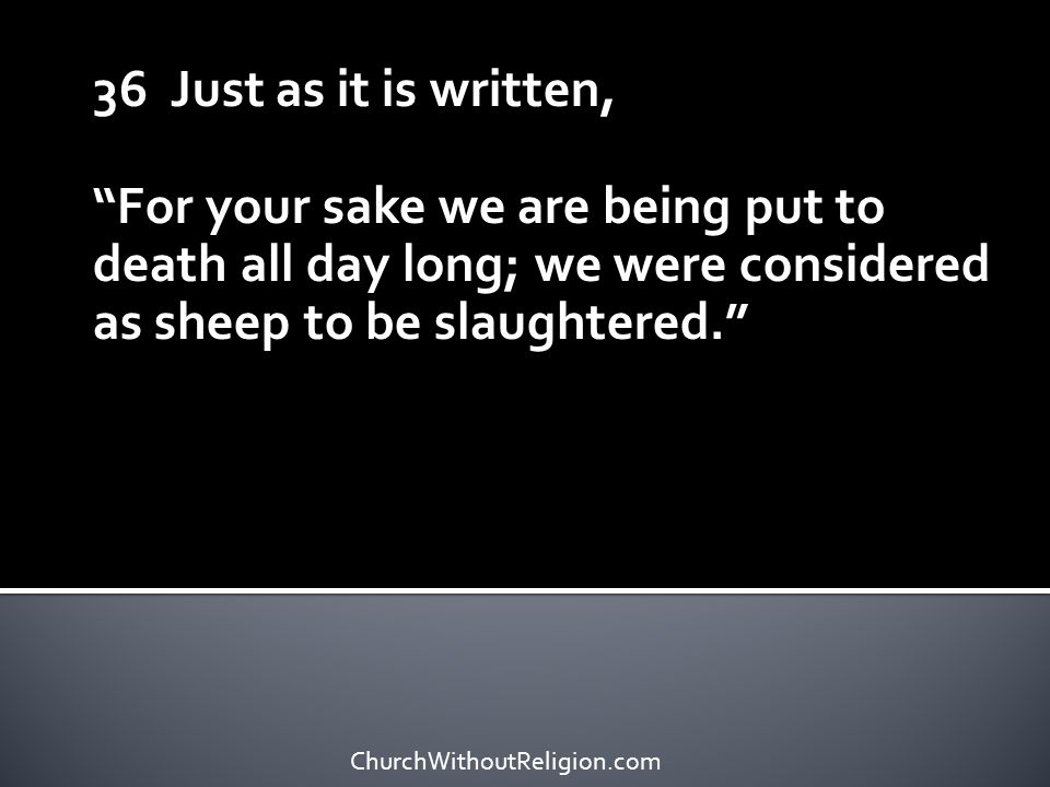"""36 Just as it is written, """"For your sake we are being put to death all day long; we were considered as sheep to be slaughtered."""" ChurchWithoutReligion"""