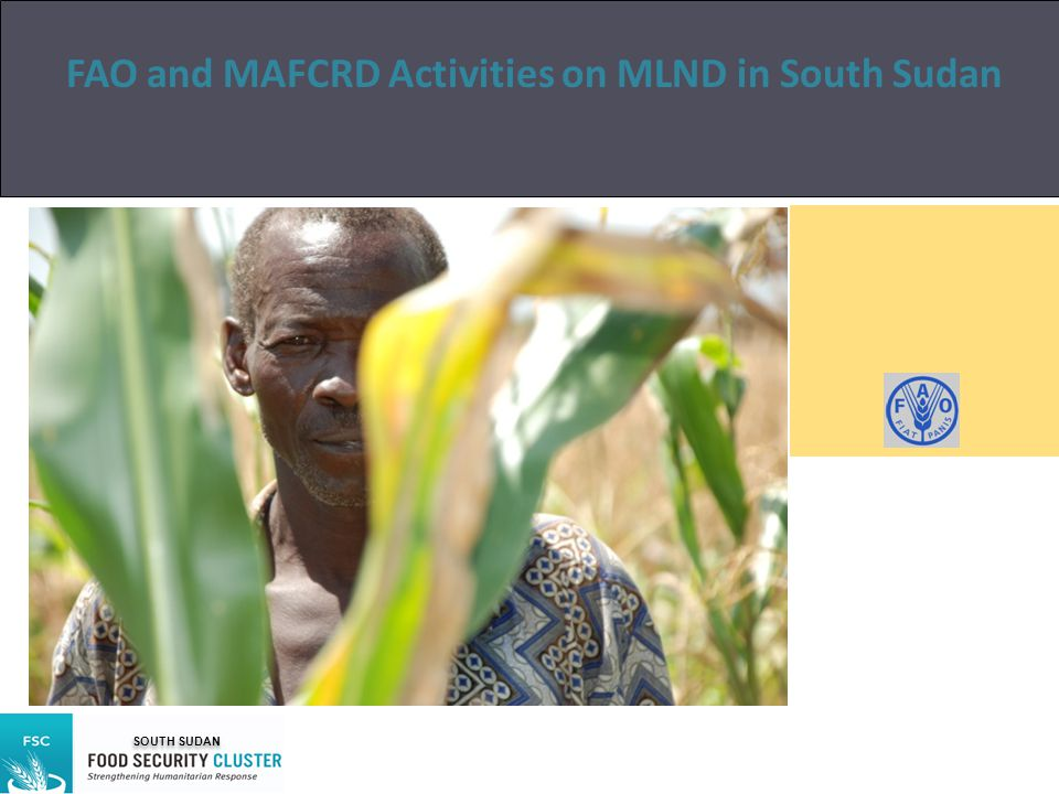 FAO and MAFCRD Activities on MLND in South Sudan Author SOUTH SUDAN