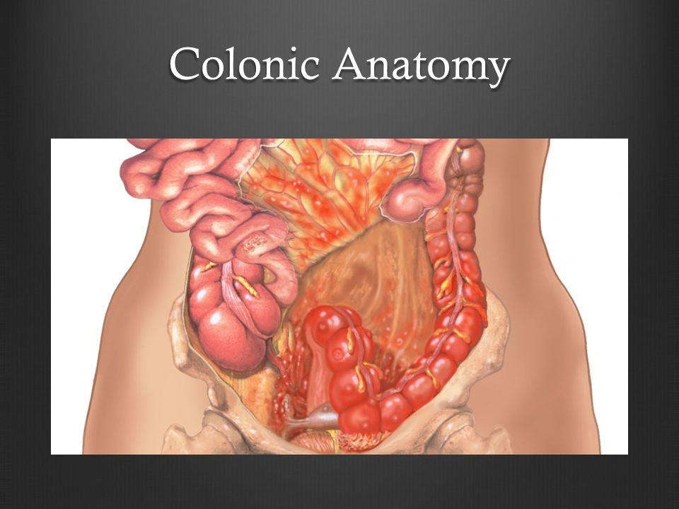Colonic Anatomy