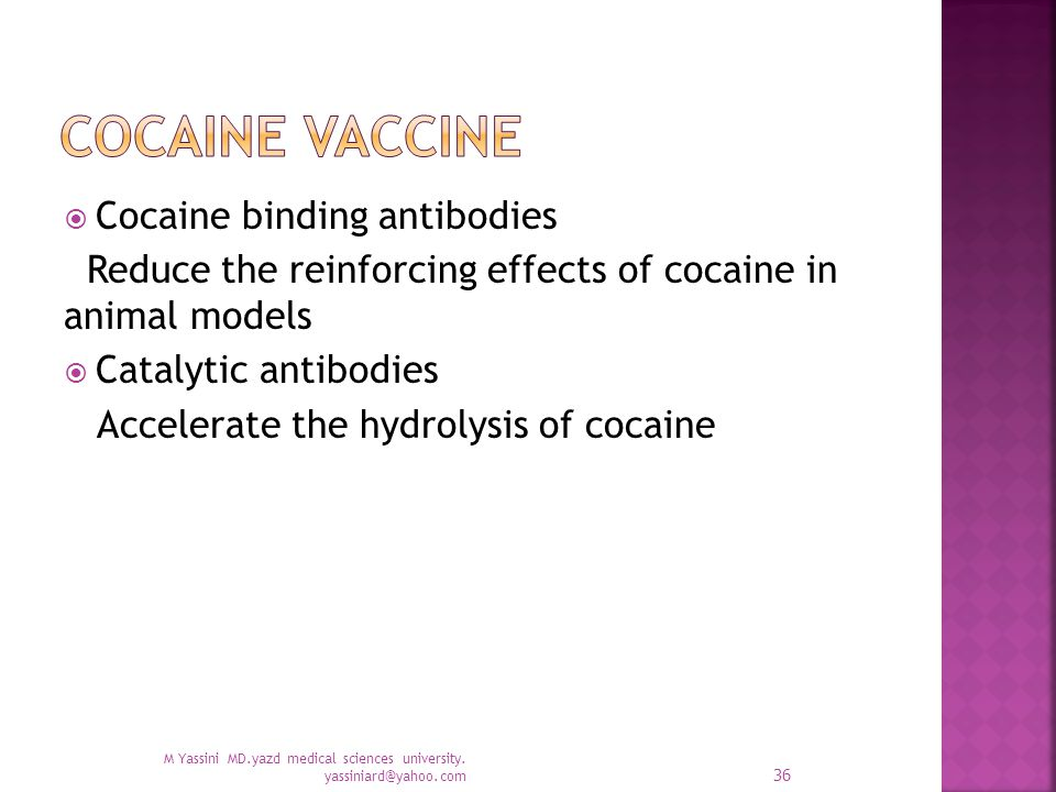  Cocaine binding antibodies Reduce the reinforcing effects of cocaine in animal models  Catalytic antibodies Accelerate the hydrolysis of cocaine M Yassini MD.yazd medical sciences university.