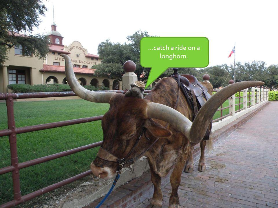 …catch a ride on a longhorn.