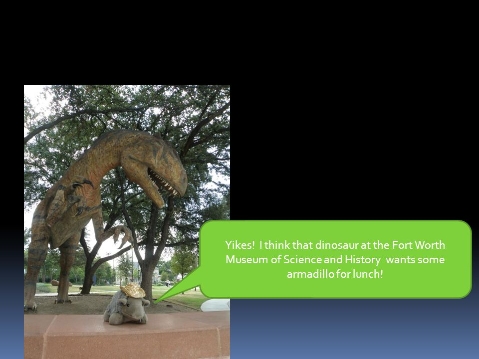 Yikes! I think that dinosaur at the Fort Worth Museum of Science and History wants some armadillo for lunch!