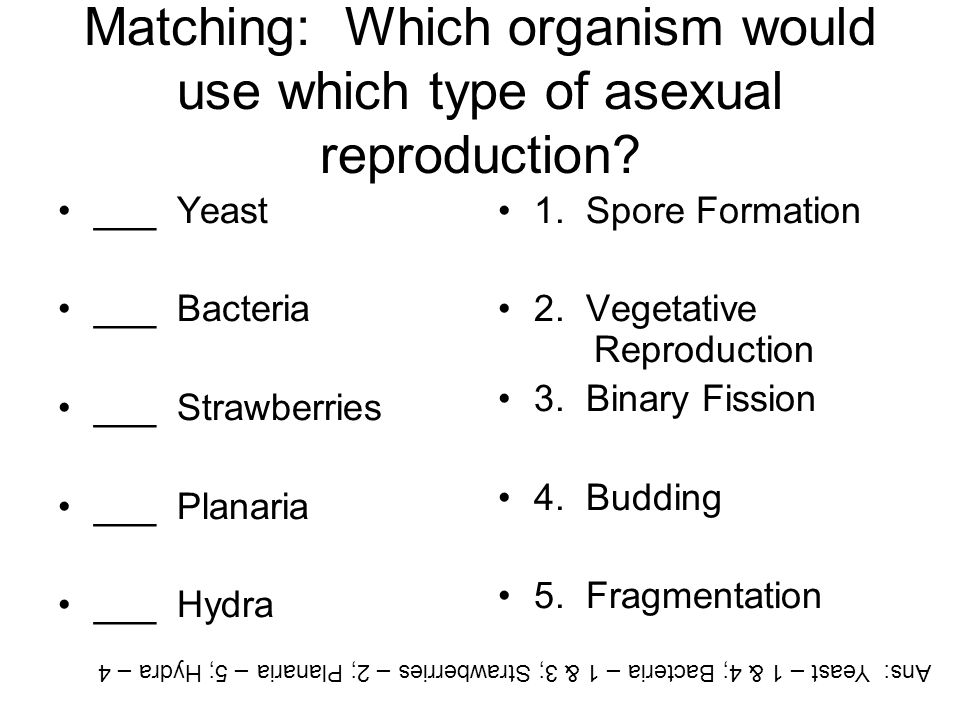 Matching: Which organism would use which type of asexual reproduction? ___ Yeast ___ Bacteria ___ Strawberries ___ Planaria ___ Hydra 1. Spore Formati