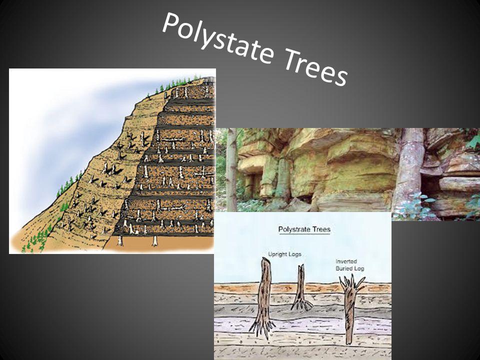 Polystate Trees