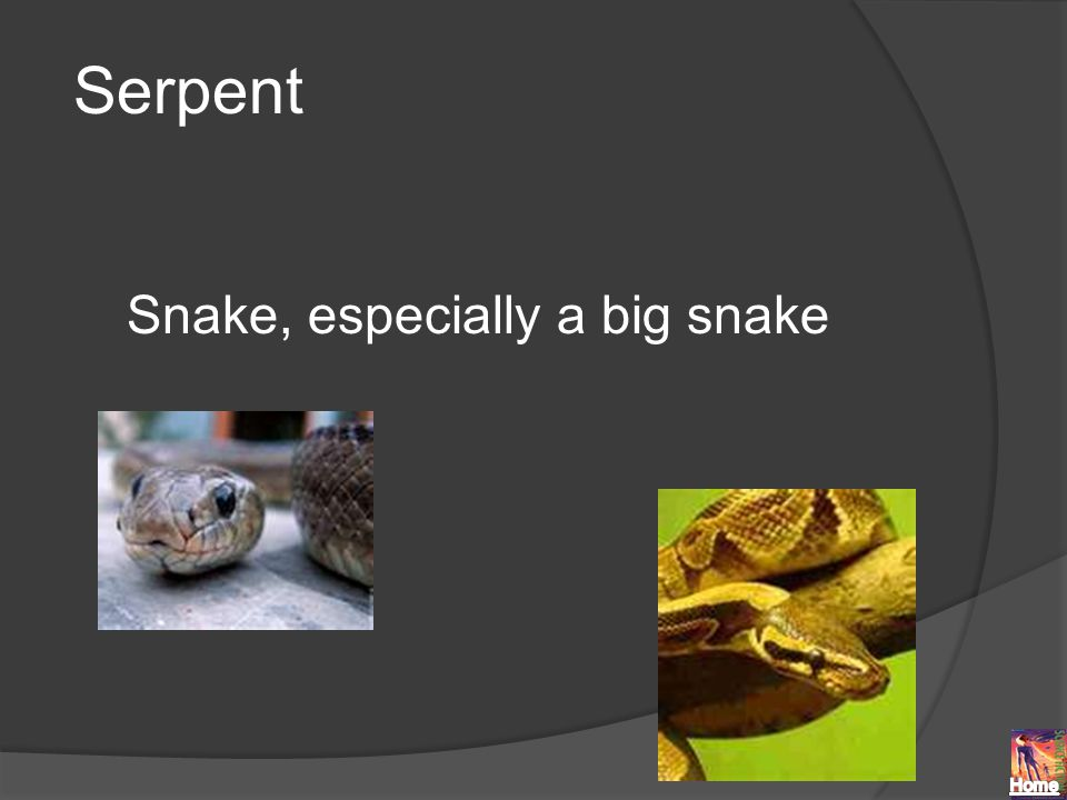 Serpent Snake, especially a big snake