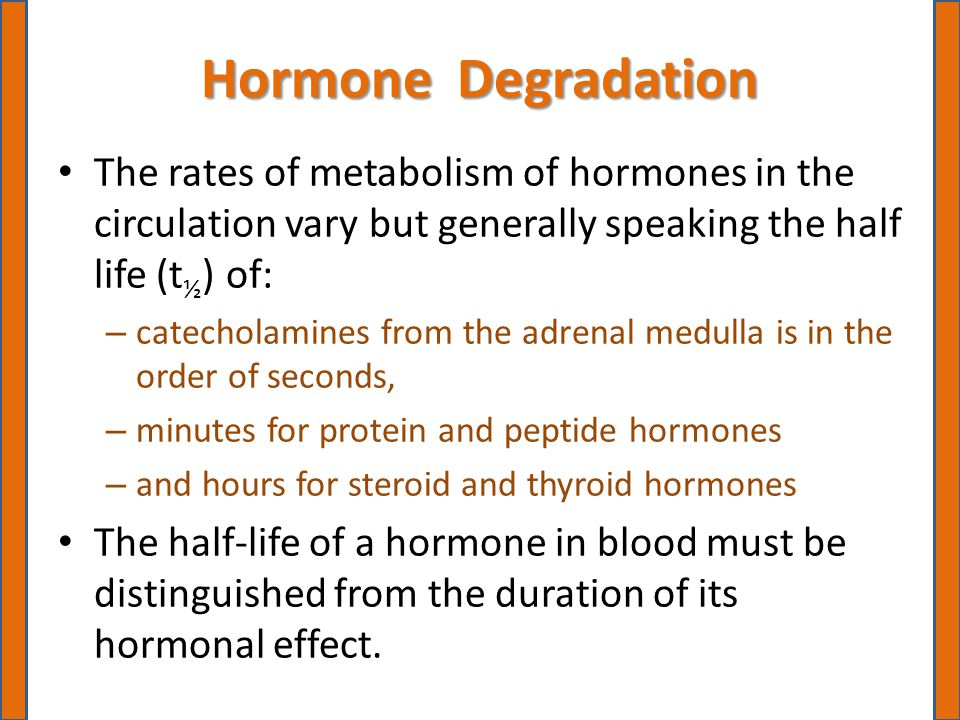 Hormone Degradation The rates of metabolism of hormones in the circulation vary but generally speaking the half life (t ½ ) of: – catecholamines from the adrenal medulla is in the order of seconds, – minutes for protein and peptide hormones – and hours for steroid and thyroid hormones The half-life of a hormone in blood must be distinguished from the duration of its hormonal effect.