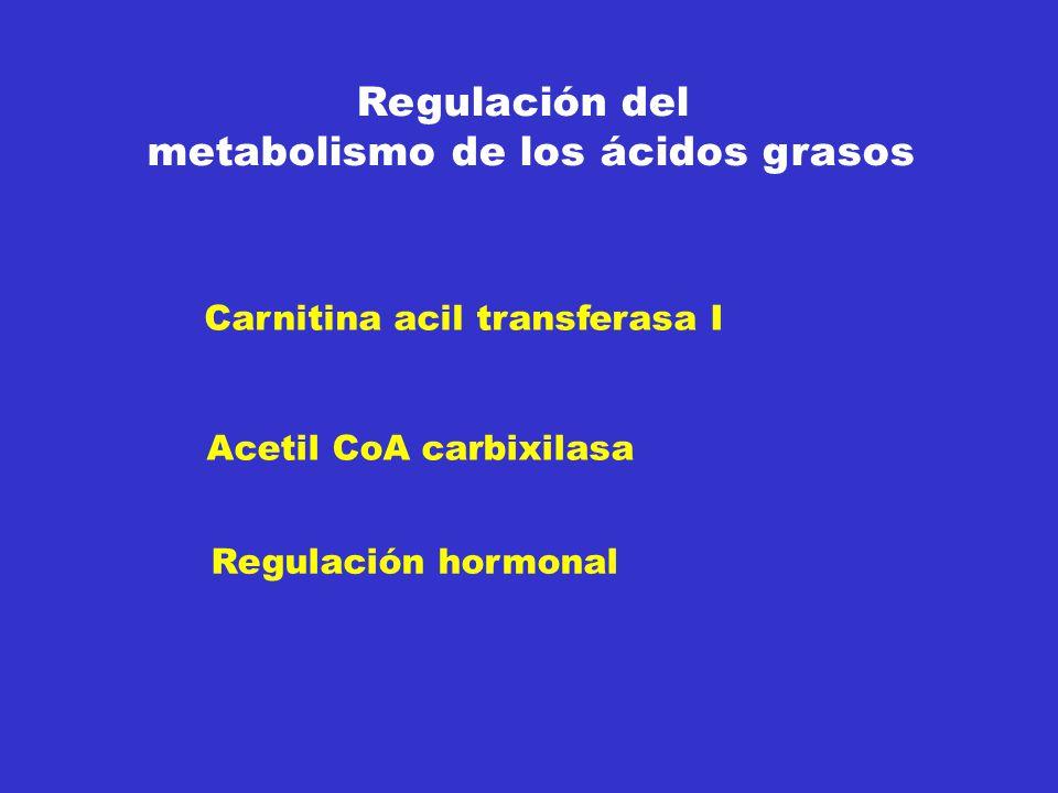 Regulación del metabolismo de los ácidos grasos Carnitina acil transferasa I Acetil CoA carbixilasa Regulación hormonal