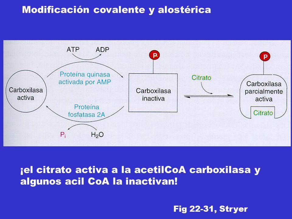 ¡el citrato activa a la acetilCoA carboxilasa y algunos acil CoA la inactivan! Fig 22-31, Stryer Modificación covalente y alostérica