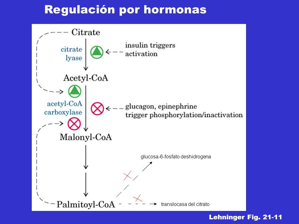 translocasa del citrato glucosa-6-fosfato deshidrogena Regulación por hormonas Lehninger Fig. 21-11