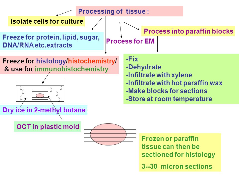 Freeze for protein, lipid, sugar, DNA/RNA etc.extracts Isolate cells for culture Freeze for histology/histochemistry/ & use for immunohistochemistry Process for EM Process into paraffin blocks Processing of tissue : -Fix -Dehydrate -Infiltrate with xylene -Infiltrate with hot paraffin wax -Make blocks for sections -Store at room temperature Dry ice in 2-methyl butane OCT in plastic mold Frozen or paraffin tissue can then be sectioned for histology 3--30 micron sections