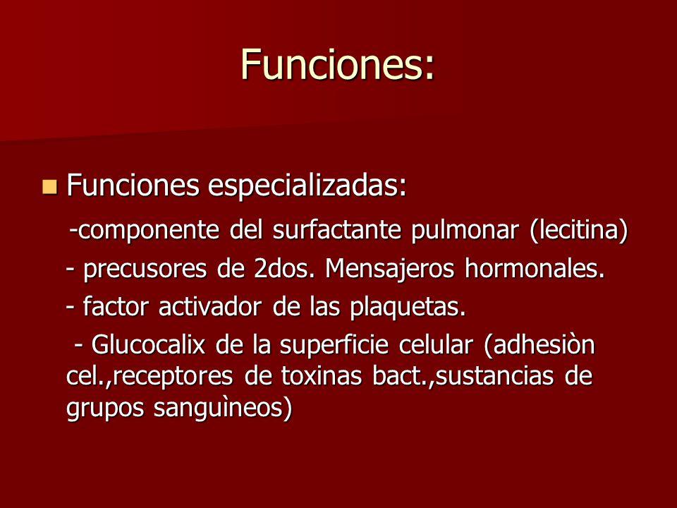 Funciones: Funciones especializadas: Funciones especializadas: -componente del surfactante pulmonar (lecitina) -componente del surfactante pulmonar (l