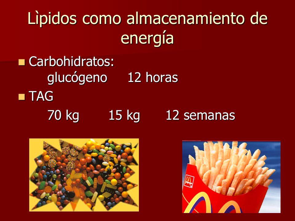 Lìpidos como almacenamiento de energía Carbohidratos: glucógeno 12 horas Carbohidratos: glucógeno 12 horas TAG TAG 70 kg 15 kg12 semanas