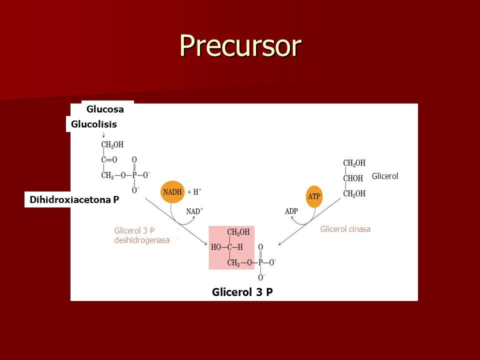 Glicerol 3 P Dihidroxiacetona P Fosfatidato Diacilglicerol PlasmalógenosPAF CardiolipinaFosfatidilinositol Fosfatidilcolina Fosfatidiletanolamina Triacilglicerol Fosfatidilinositol 4,5 bifosfato
