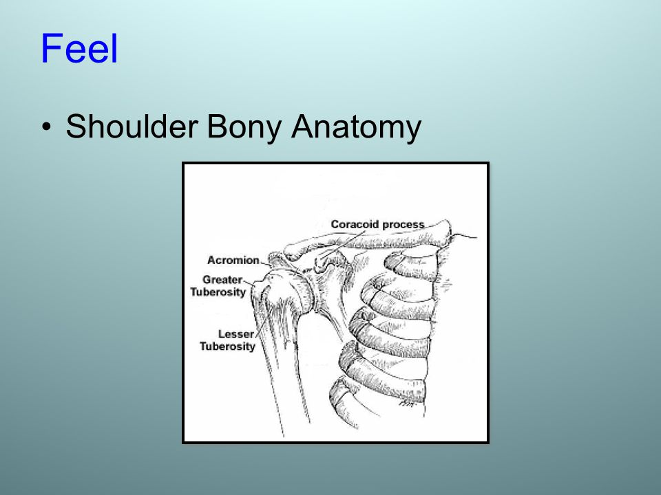 Feel Shoulder Bony Anatomy