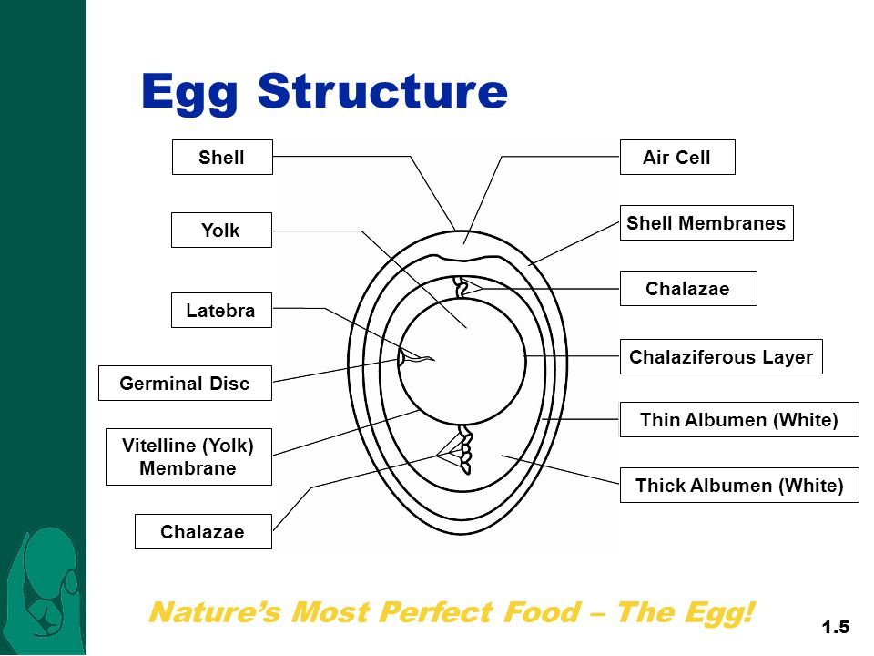 Nature's Most Perfect Food – The Egg.Egg Structure 1.5 Nature's Most Perfect Food – The Egg.