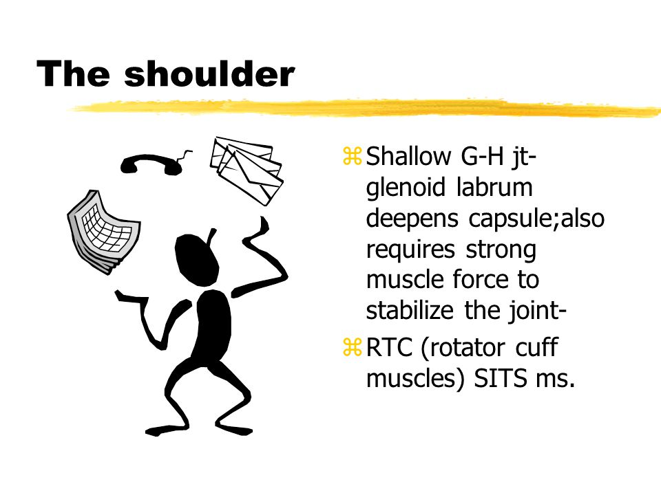 zLigaments of shoulder joint: zA-C ligament-sup and inf reinforce the joint capsule and prevent post dislocation of the clavicle zG-H ligaments-originate from labrum and attach to lesser tubercle and anat neck (reinforce capsule) sup, mid and inf bands zCoracoclavicular lig.- lat(trapezoid) and med(conoid) Both prevent backward mvmt of the scapula and ind they limit scap rotation