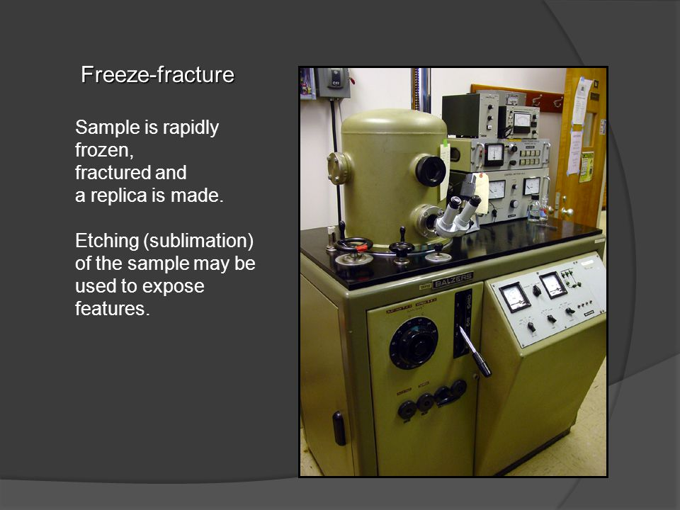 Freeze-fracture Sample is rapidly frozen, fractured and a replica is made.