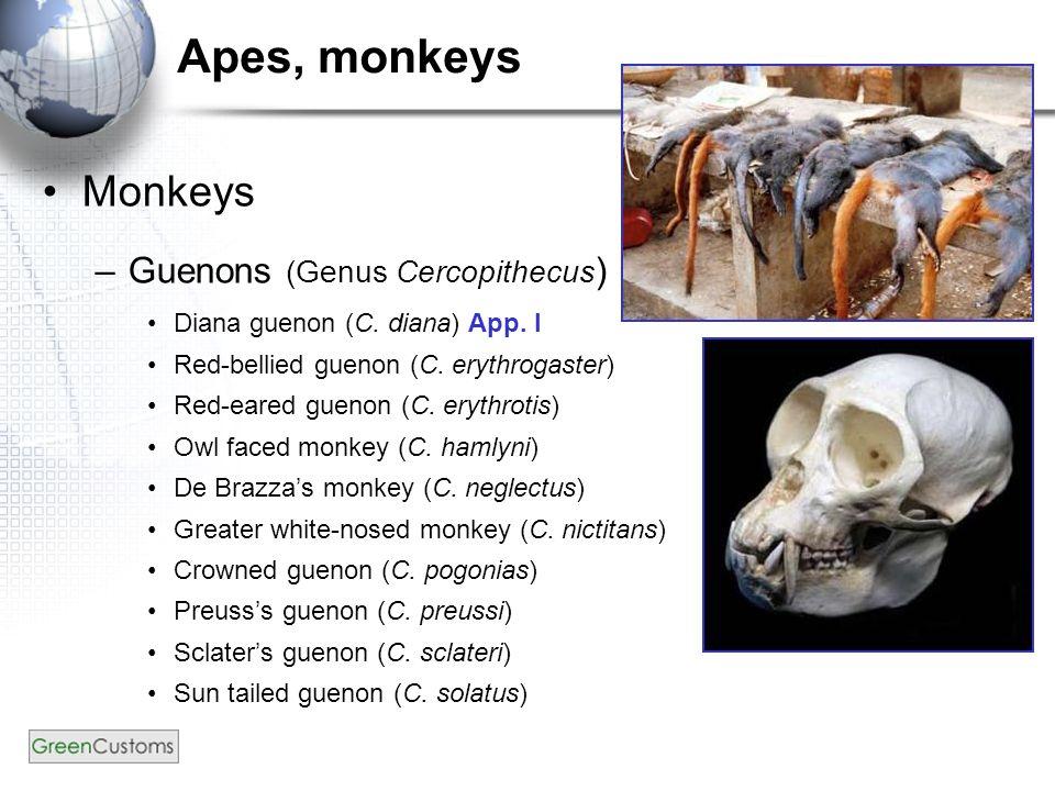 Apes, monkeys Monkeys –Guenons (Genus Cercopithecus ) Diana guenon (C.