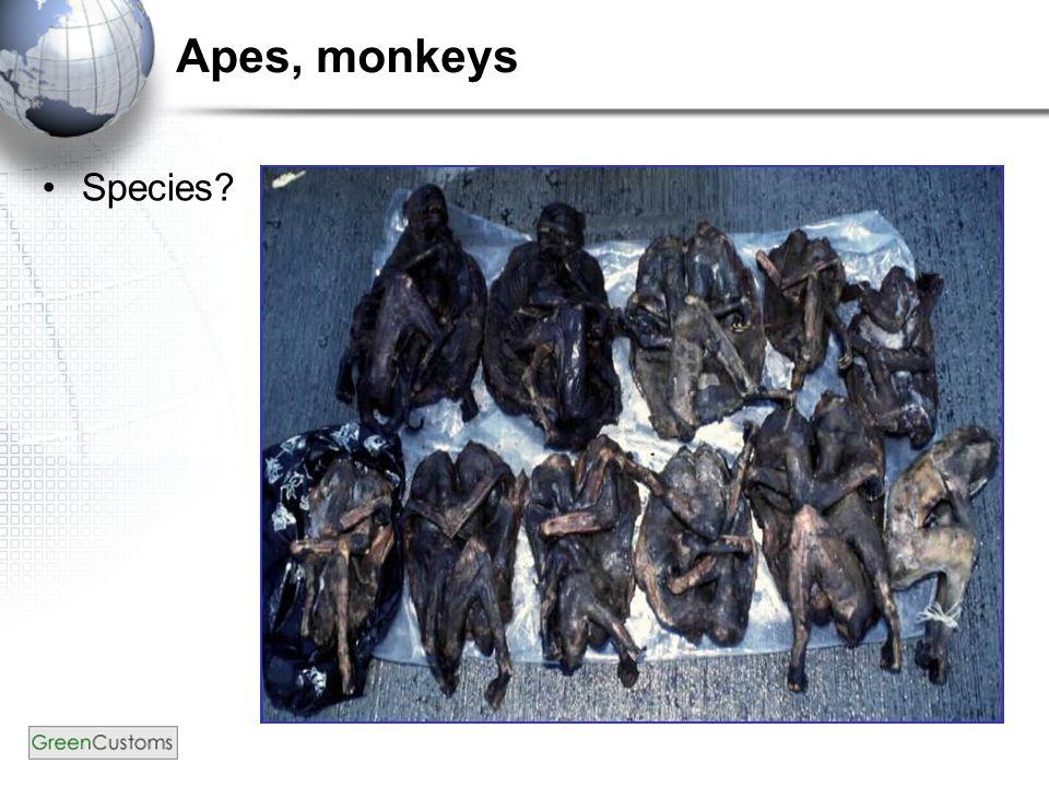 Apes, monkeys Species?