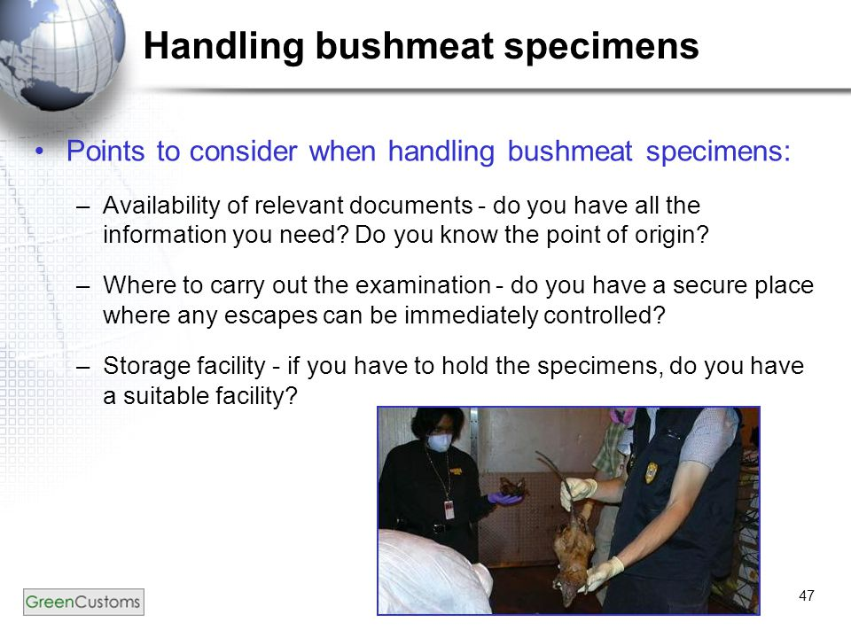 47 Handling bushmeat specimens Points to consider when handling bushmeat specimens: –Availability of relevant documents - do you have all the information you need.