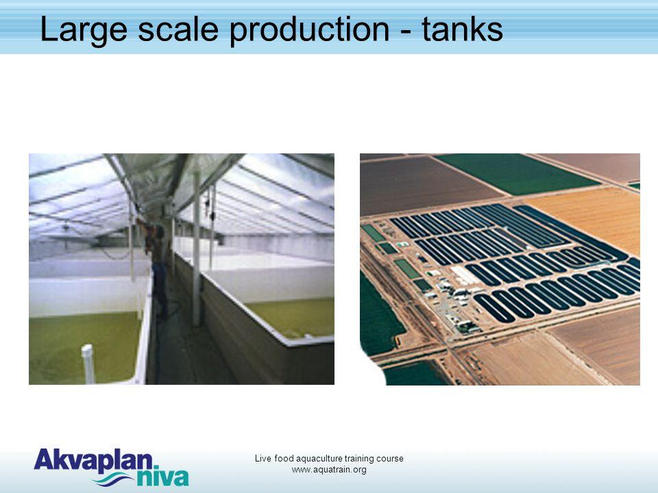 Live food aquaculture training course www.aquatrain.org Large scale production - tanks