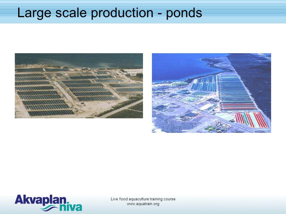 Live food aquaculture training course www.aquatrain.org Large scale production - ponds