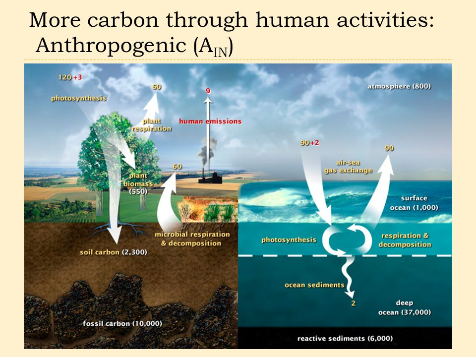 More carbon through human activities: Anthropogenic (A IN )