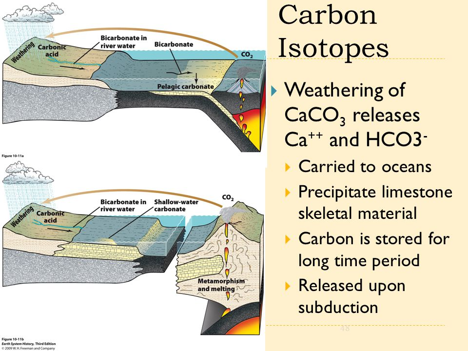 Carbon Isotopes  Weathering of CaCO 3 releases Ca ++ and HCO3 -  Carried to oceans  Precipitate limestone skeletal material  Carbon is stored for