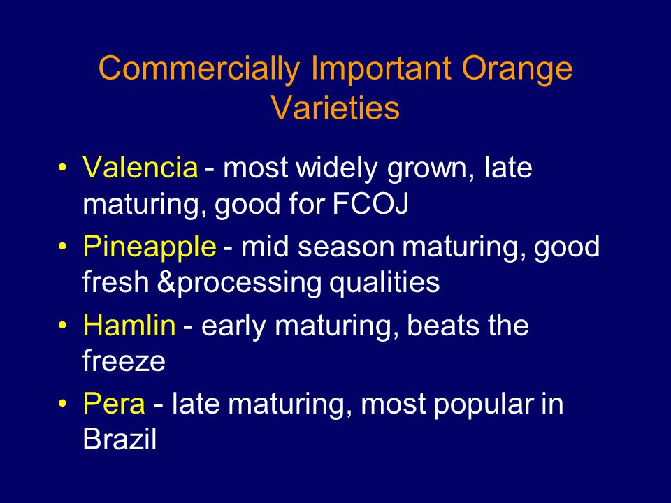 Commercially Important Orange Varieties Valencia - most widely grown, late maturing, good for FCOJ Pineapple - mid season maturing, good fresh &proces