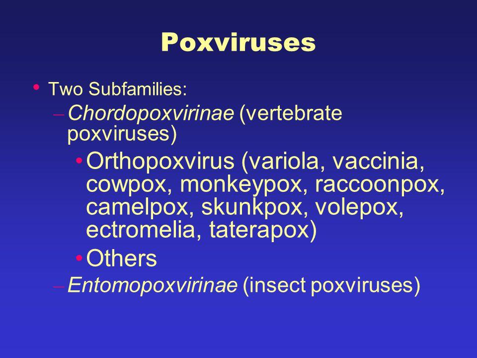Poxviruses Two Subfamilies: – Chordopoxvirinae (vertebrate poxviruses) Orthopoxvirus (variola, vaccinia, cowpox, monkeypox, raccoonpox, camelpox, skunkpox, volepox, ectromelia, taterapox) Others – Entomopoxvirinae (insect poxviruses)