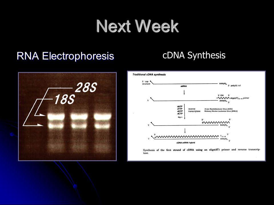 Next Week RNA Electrophoresis cDNA Synthesis
