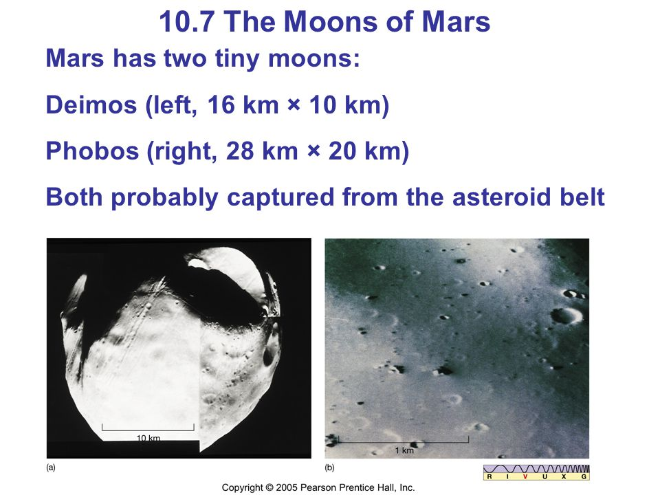10.7 The Moons of Mars Mars has two tiny moons: Deimos (left, 16 km × 10 km) Phobos (right, 28 km × 20 km) Both probably captured from the asteroid be