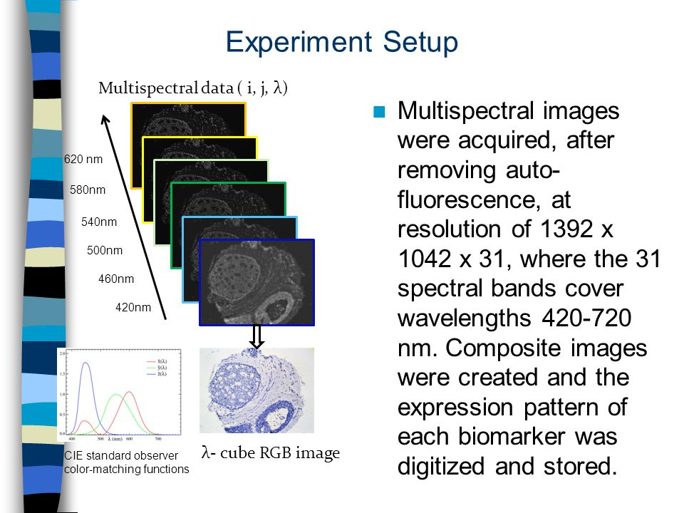 Experiment Setup Multispectral images were acquired, after removing auto- fluorescence, at resolution of 1392 x 1042 x 31, where the 31 spectral bands cover wavelengths 420-720 nm.