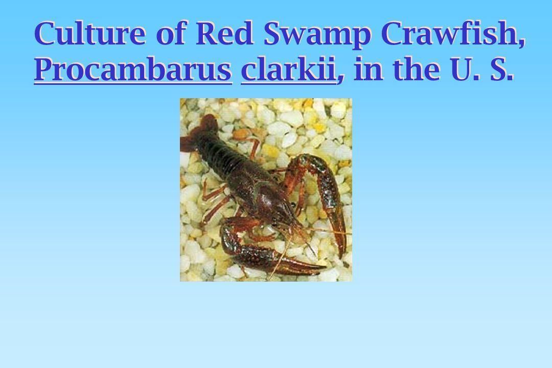 Culture of Red Swamp Crawfish, Procambarus clarkii, in the U. S. Culture of Red Swamp Crawfish, Procambarus clarkii, in the U. S.