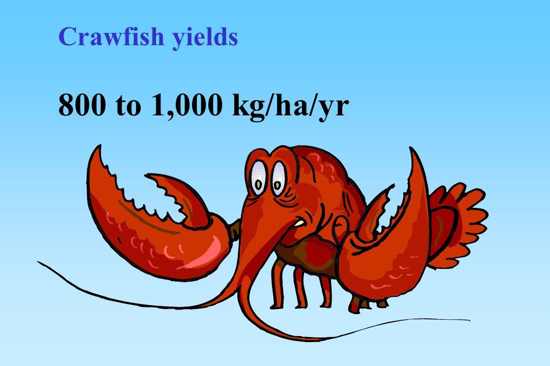 Crawfish yields 800 to 1,000 kg/ha/yr