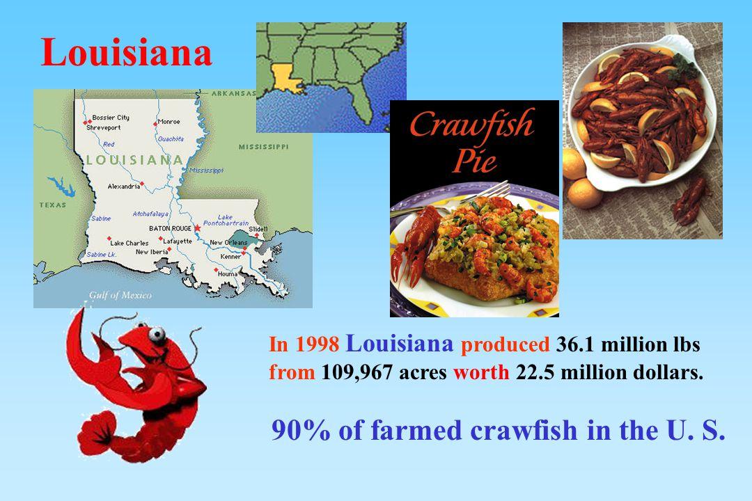 In 1998 Louisiana produced 36.1 million lbs from 109,967 acres worth 22.5 million dollars. 90% of farmed crawfish in the U. S. Louisiana