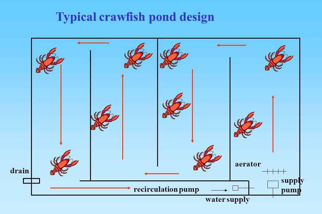recirculation pump supply pump aerator water supply drain Typical crawfish pond design