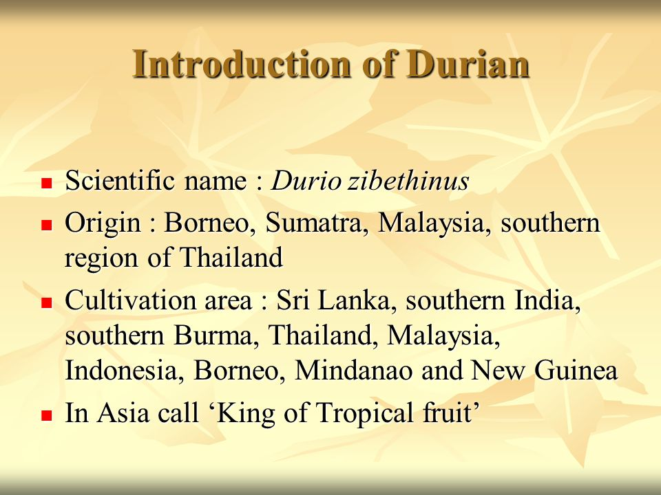 Introduction of Durian Scientific name : Durio zibethinus Scientific name : Durio zibethinus Origin : Borneo, Sumatra, Malaysia, southern region of Thailand Origin : Borneo, Sumatra, Malaysia, southern region of Thailand Cultivation area : Sri Lanka, southern India, southern Burma, Thailand, Malaysia, Indonesia, Borneo, Mindanao and New Guinea Cultivation area : Sri Lanka, southern India, southern Burma, Thailand, Malaysia, Indonesia, Borneo, Mindanao and New Guinea In Asia call 'King of Tropical fruit' In Asia call 'King of Tropical fruit'