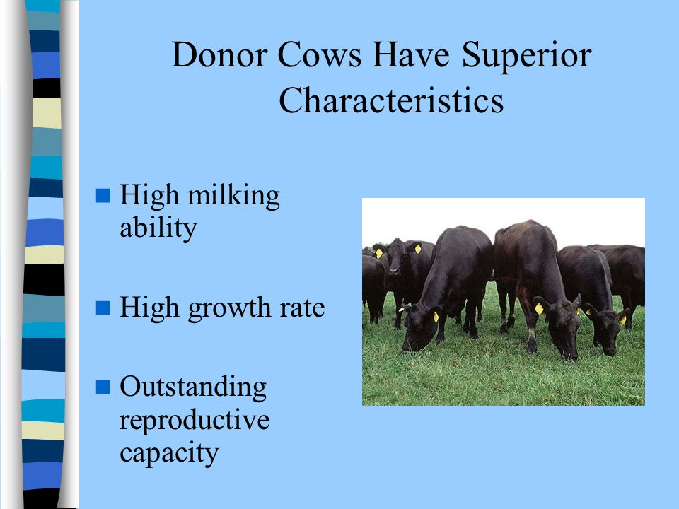 Donor Cows Have Superior Characteristics High milking ability High growth rate Outstanding reproductive capacity