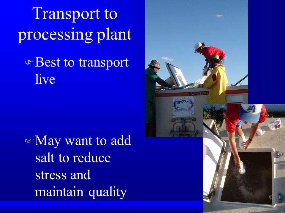 Transport to processing plant F Best to transport live F May want to add salt to reduce stress and maintain quality