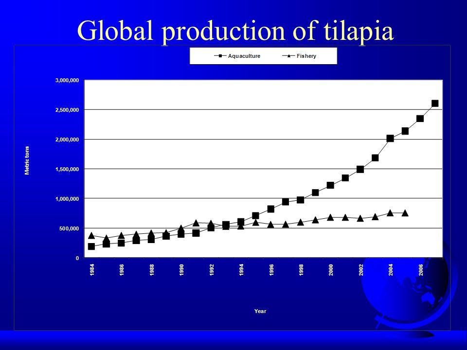 Global production of tilapia